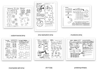 Genetics coloring sheet bundle