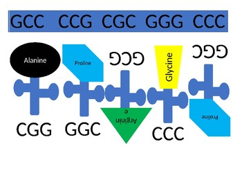 Genetics - simple translation starter activity