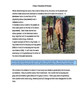 Genetics with Horses Math Activity