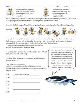 Genetics with Model Organisms 1: Genotypes and Phenotypes