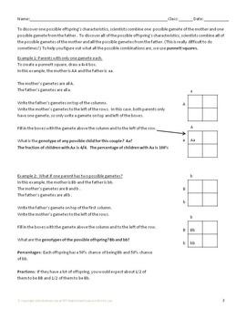 Genetics with Model Organisms 2: Punnett Square Skills