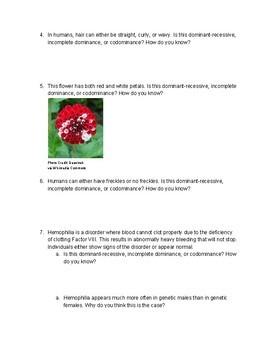 Genotype and Phenotype Practice