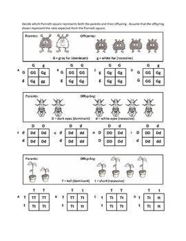 Worksheets Punnett Square Worksheet genotypes and punnett squar by haney science teachers pay square worksheets