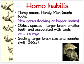Genus Homo: PowerPoint, illustrated Student Guided Notes, Worksheet