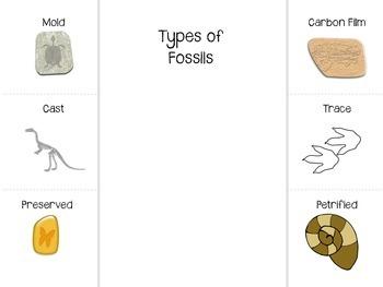 Fossils Interactive Notebook