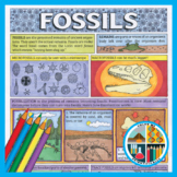 Geology Coloring: Fossils PLUS Bonus Materials