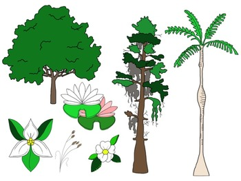 Georgia Habitats: Plants & Animals Clip Art Set