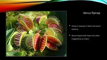 Georgia Plant Adaptations