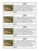 Animal and Plant Adaptations and Habitat Writing Prompts