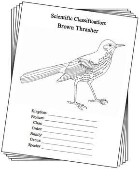 Georgia State Bird Notebooking Set Brown Thrasher