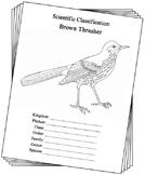 Georgia State Bird Notebooking Set (Brown Thrasher)