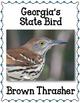 Georgia State Bulletin Board Set.  US State History