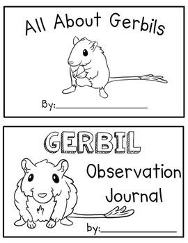 Gerbil Classroom Pet