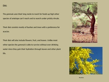 Gerenuk - Antelope - Power Point Information Facts Review Pictures