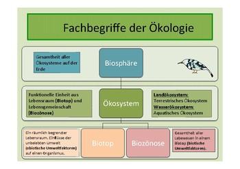 German: Ökologie - Eine Einführung