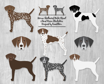 German Shorthaired Pointer Clipart - 8 Hand Drawn Hunting Dog Illustrations