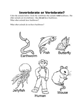 Get a Little Backbone- Animals with Internal Bones