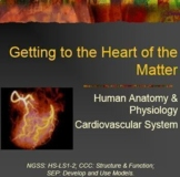 Getting to the Heart of the Matter ~ Cardiovascular System