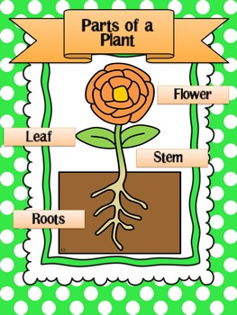 Getting to the ROOT of it all! A plant unit.