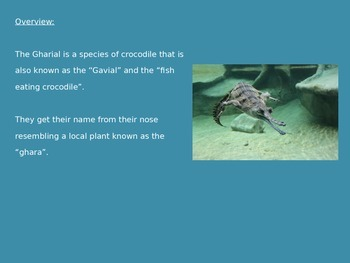 Gharial - Crocodile Power Point - Facts - History - Pictures