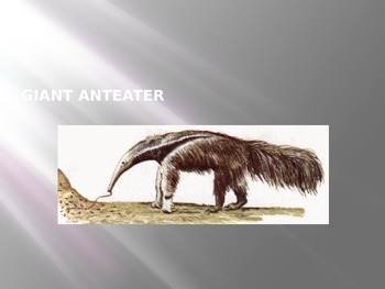 Giant Anteater - Power Point - Information Pictures Facts