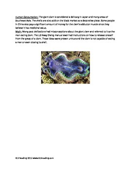 Giant Clam - Review Article information facts questions vocabulary
