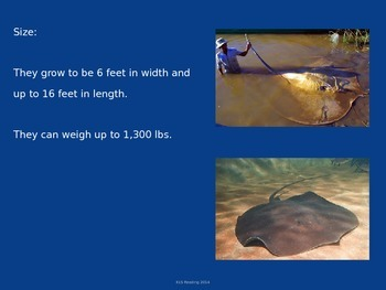 Giant Freshwater Stingray - Power point - Facts Pictures etc.