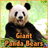 Giant Panda Bears - PowerPoint and Activities