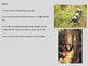 Giant Panda Powerpoint - facts information pictures