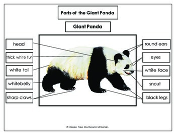 Printables: Free Label the parts of a Giant Panda
