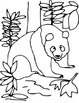 ANiTAiLS: Giant Panda Story, Crossword, Coloring Page and More