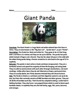 Giant Panda - informational  lesson facts questions true/false word search