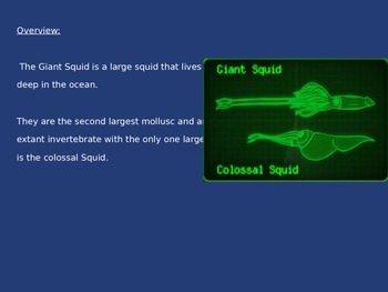 Giant Squid - Power Point - Information Facts Pictures History