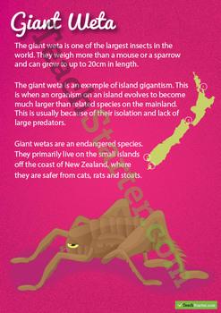 Giant Weta – New Zealand Animal Poster