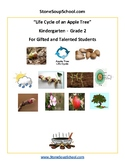 "Kindergarten ""The Life Cycle of an Apple Tree"" Biology for Gifted and Talented"