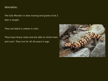 Gila Monster - Power Point - Information Pictures Facts