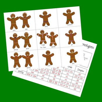 Gingerbread Genotypes and Punnett Square Practice: A Holiday Activity