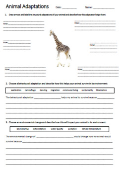 Giraffe Adaptations Worksheet | Year 5 Science (ACSSU043)