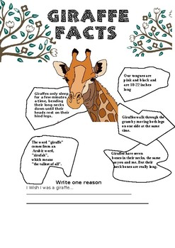 Giraffe Facts By Sandra Fernandes Teachers Pay Teachers