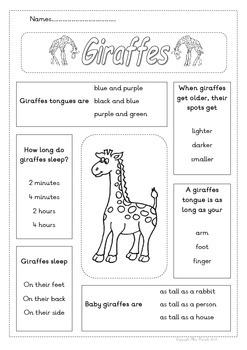 Giraffe Facts Worksheet P2