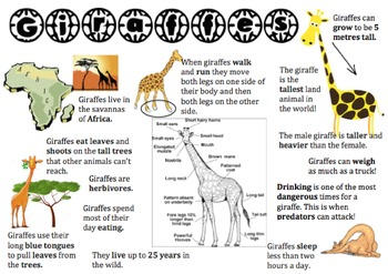 Giraffe Information Report Visual