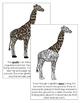 Giraffe Nomenclature Book
