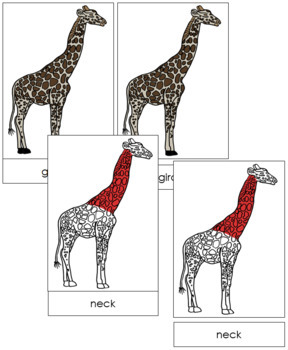 Giraffe Nomenclature Cards (Red)