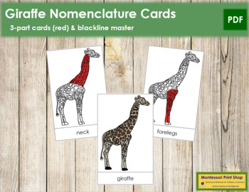 Giraffe Nomenclature Cards (Red)