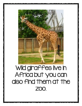 Giraffe Nonfiction Text