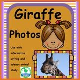 Giraffe Photos for Informative Writing & Animal Study FREEBIE
