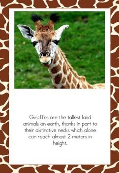 Giraffe Posters/Flash Cards