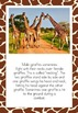 Giraffe Posters/Flash Cards