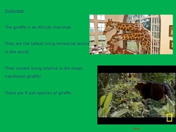 Giraffe - Power point Facts Life Pictures