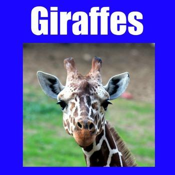 Giraffes PowerPoint
